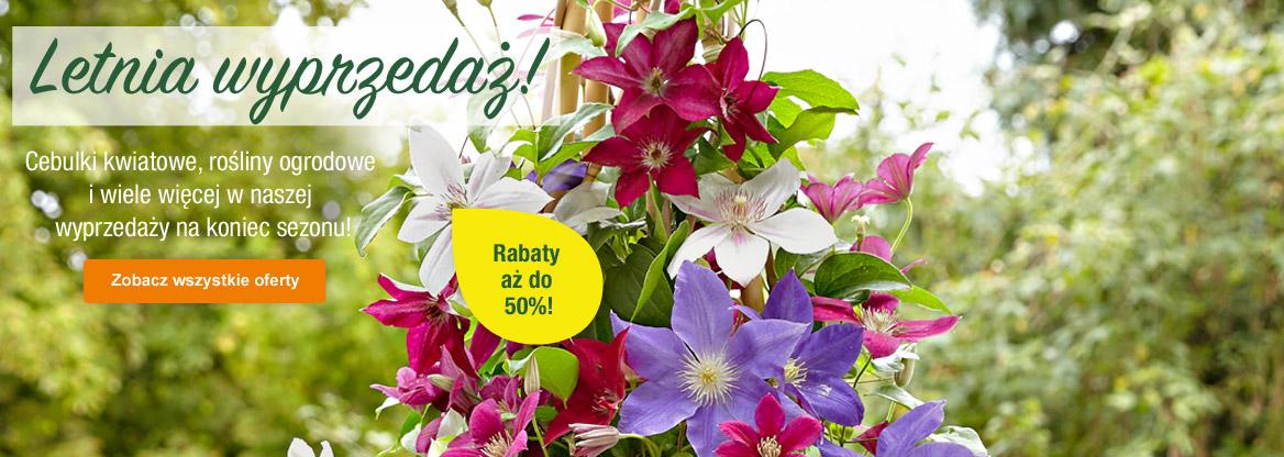 Bakker: letnia wyprzedaż do 50% zniżki na cebulki kwiatowe, rośliny ogrodowe