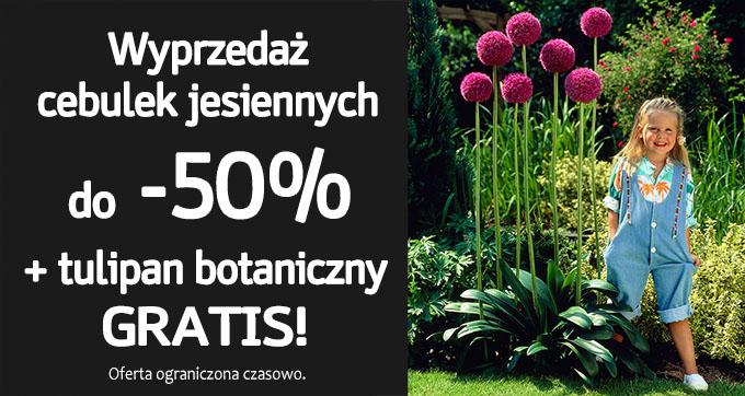 Świat Kwiatów: wyprzedaż do 50% zniżki na cebulki jesienne
