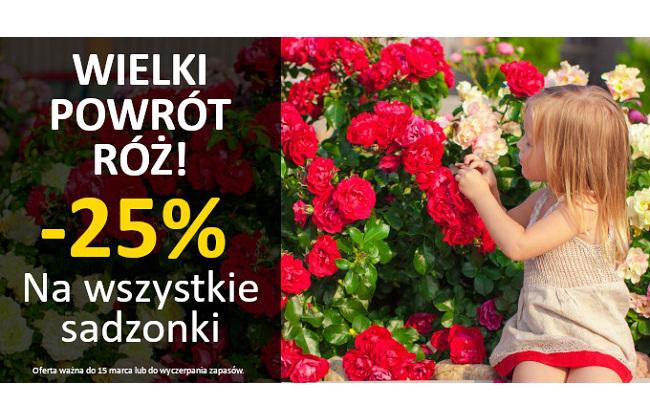 Świat Kwiatów: 25% rabatu na wszystkie sadzonki róż